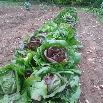 Beautiful Crops at Emma's Acres